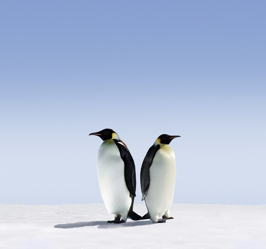 Penguin 4.0 need to know - brightedge